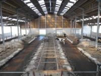 14.Joubieval-etable-vaches-laitieres08_1024